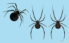 Get Rid of Black Widow Spiders - wikiHow