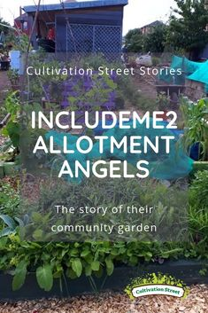 Cultivation Street Stories Allotment Angels the story of their community garden Planting Bulbs In Spring, Spring Bulbs, Garden Projects, Garden Ideas, Wild Bird Feeders, Work Site, Allotment, Growing Vegetables, Geraniums