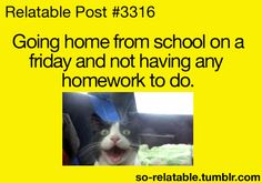 cat tumblr posts | gif cat gifs cats kitten school kittens Friday homework saturday