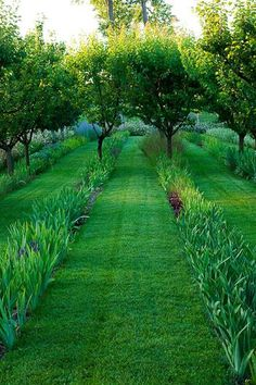 Underplanting fruit trees in rows - Orchard Chateau Plaisir. A stunning country Chateau garden in the south of France. Iris Garden, Garden Paths, Garden Landscaping, Citrus Trees, Fruit Trees, Fruit Tree Garden, Formal Gardens, Outdoor Gardens, Landscape Architecture
