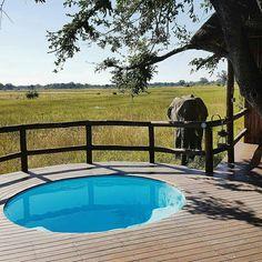 "Yes this is definitely the best wake up call! Reposting @aksaidy:  ... ""Is this the best way to wake up? 'Boy' the resident elephant at Chief's camp has your wake up call covered! #Chief #sanctuary #SanctuaryRetreats #elephants #boy #pool #elephantgardening #Botswana #Okavango #Delta #MoremiGameReserve #travel #traveltheworld #travelinstyle #instatravel #discover #explore #AktheExplorer #lifeisajourney #lifeoftravel #luxurytravel #luxury #luxuryhotels #CNtraveller #africa #bluesky #safari…"