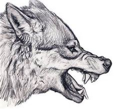 Wolf Head Drawings - Bing images