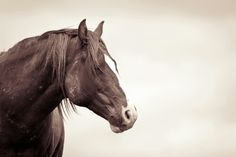 Mustang photography