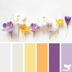 Explore Design Seeds color palettes by collection. Color Schemes Colour Palettes, Colour Pallette, Color Palate, Color Combos, Design Seeds, Color Concept, Color Harmony, In Color Balance, Balance Design