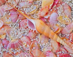 Seashells (this photo also makes a great phone or laptop background in the summer)