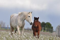 Mare and her foal in a field