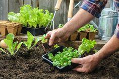 Mediante la utilización del calendario lunar, se pueden obtener cosechas perfectas y siembras inigualables, es decir todo lo que espera un buen agricultor.