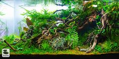simonsaquascapeblog: Favourites: Aquascape by Christian Brams So much details in this tank! One could stare at it for hours…