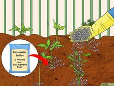 How to Acidify Soil: 14 Steps (with Pictures) - wikiHow