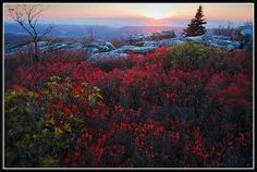 Beautiful Dolly Sods alive with color