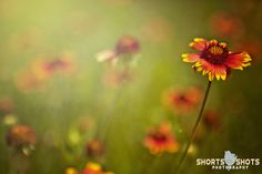 Texas Wildflowers <3