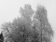 Der Raureif nach dem Nebel