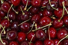 These are bing cherries. We have a dwarf bing cherry tree in our backyard that just started bearing fruit! Cherry Baby, Cherry Fruit, Cherry Tree, Bing Cherries, Sweet Cherries, Foods Good For Gout, Best Fruits For Diabetics, Gout Recipes, Cherry Season