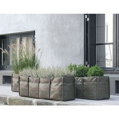 BACSAC make your own little garden  #lifeinstyle #greenwithenvy