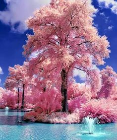 Beautiful!! Crystal Clear water & amazing tree in full bloom.