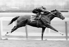 Today in Horse Racing History – April 21, 1973: In a surprising defeat, Secretariat finished third to stablemate Angle Light and runner-up Sham in the Wood Memorial Stakes at Aqueduct, his last start before sweeping the Triple Crown. The following day, Secretariat was found to have had an abscess in his mouth, which may have caused him discomfort while racing. 9th U.S. Triple Crown Champion in 1973 American Horse of the Year in 1972 and 1973 Hall of Fame in 1974 U.S. Postage Stamp in 1999