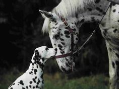 Are you my Mother?  Horse and dog