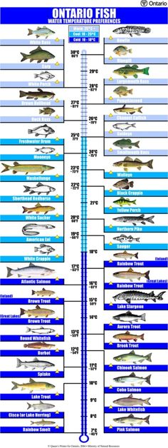 Fish Facts - Government of Ontario Canada, Ontario Minsitry of Natural Resources