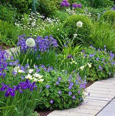 Border met witte en paarse planten #border #tuin #planten #wit #paars