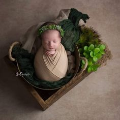 Newborn girl photography, succulent garden