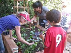 Transition Laguna helps a homeowner plant a garden. Spirit buoyed! http://gold-boat.com
