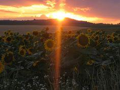 worldwidewandering - a travel atlas Kenko, Sunflowers, Moonlight, Countryside, Weather, Sunset, Photo And Video, World, Travel