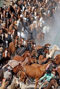 The Great American Horse Drive, Sombrero Ranch, Colorado