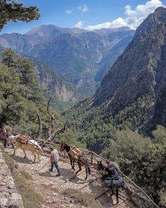 Man and beast hike through Samaria Gorge.
