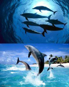 saltando, delfines, paper, original