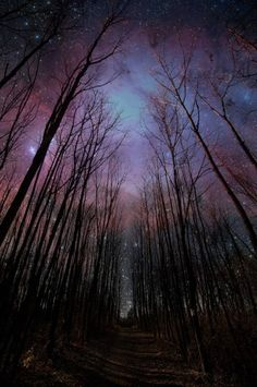 starry night in the woods // nuit étoilée dans les bois All Nature, Science Nature, Nature Gif, Nature Images, Pretty Pictures, Cool Photos, Random Pictures, Pictures Images, Beautiful World
