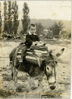 Riding a mule - Μουλαρομεταφορά Old Pictures, Old Photos, Old Greek, Greece Photography, Greek History, The Son Of Man, Athens Greece, Rare Photos, Vintage Images
