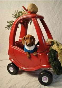 A dachshund and a Cozy Coupe??? What's not to love?