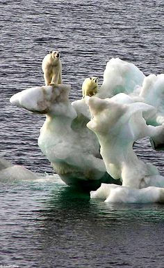 NOTES: The polar bears are losing their habitat.
