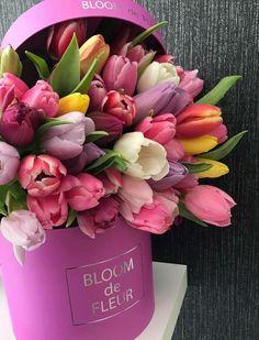 tulips garden care 50 tenues e - gardencare Tulips Flowers, Pretty Flowers, Spring Flowers, Tulips Garden, Flower Box Gift, Flower Boxes, Amazing Flowers, Beautiful Roses, Luxury Flowers