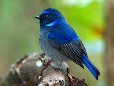 Robin Olds, Bird Wings, Blue Garden, Birds Of Prey, Bird Species, Wild Birds, Dragonflies, Natural Wonders, Bird Feathers