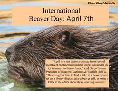 MartinezBeavers.org » Blog Archive » Silicon Valley Beavers
