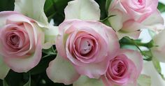 Tonjes Home - a blog about our home, style and beauty: Pretty pink roses from my love. Roser, roses, rosa, pink, flowers, flower, blomst, blomster, snittblomster, beautiful, colorful, interior, interiør, fargerikt