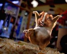 Ninja hamster!