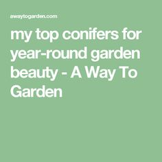 my top conifers for year-round garden beauty - A Way To Garden
