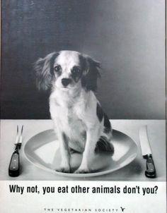 help stop animal testing | vegetarian love animals help animals dog animal cruelty