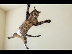 Funny Cats - A Funny Cat Videos Compilation 2016 [NEW HD] - YouTube