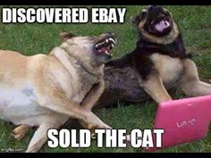 Discovered eBay. Sold the cat.