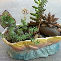 Succulent in vintage pottery