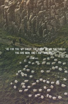 As for you, my sheep, the sheep of my pasture, you are men, and I am your God. -Ezekiel 34:31