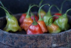 Cate Legume Cultivam în Gradina Seeds, Stuffed Peppers, Dining, Vegetables, Food, Gardening, Cottages, Flowers, Plant
