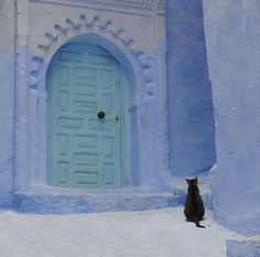 Who wants to be alone (Chefchaouan, Morocco) -- photo by PhotoSenseDatum