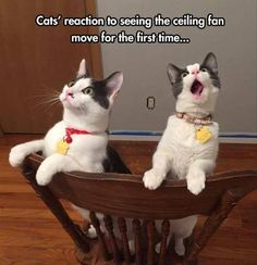 fan-for-cats funny animal pictures pictures funny Animals