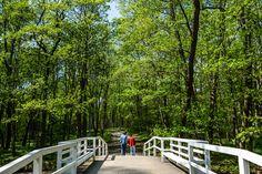 Ramsholmen forest park in Raseborg, Finland
