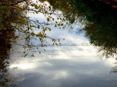 Nature Reflection  Photo by Saba Khozoui — National Geographic Your Shot      #water #sky #yourshot #natgeo #reflection #nature #trees #abstractphotography #clouds