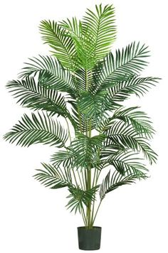 Nearly Natural 5261 Paradise Artificial Palm Tree, 7-Feet, Green Nearly Natural http://www.amazon.com/dp/B004XWCYGY/ref=cm_sw_r_pi_dp_GSz.vb1AJ0NVP